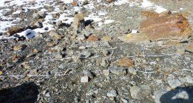 Rasche Besiedelung im Gletschervorfeld